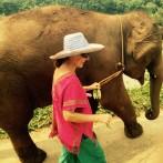 Happy Elephants in Thailand