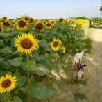 A Day in My Life – Dog Sitting in France