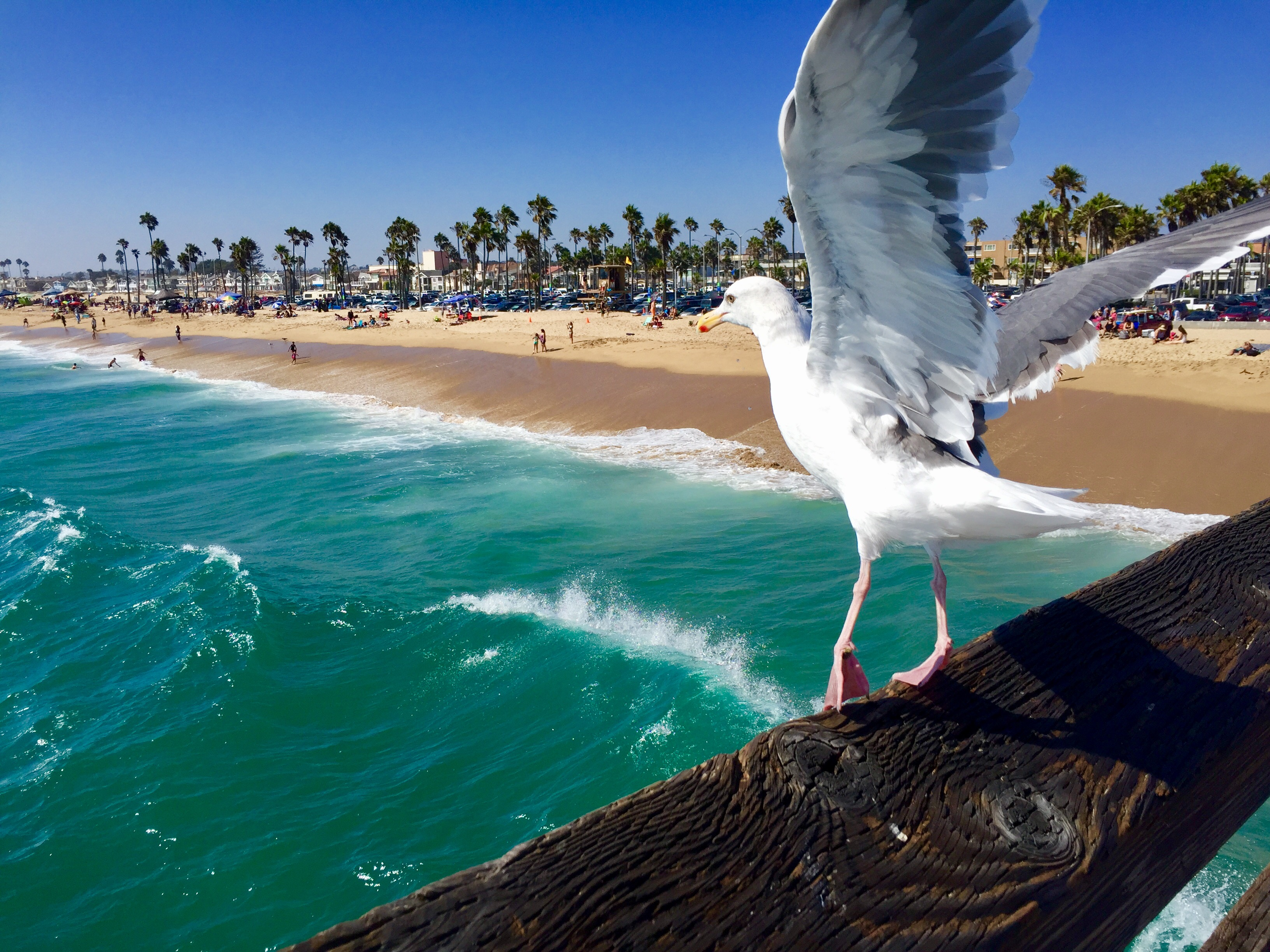 California dreaming southern beach towns travelynn tales for Beach cities in california
