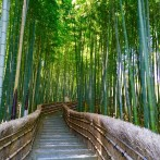 Arashiyama: Bamboo Groves & Zen Dreams